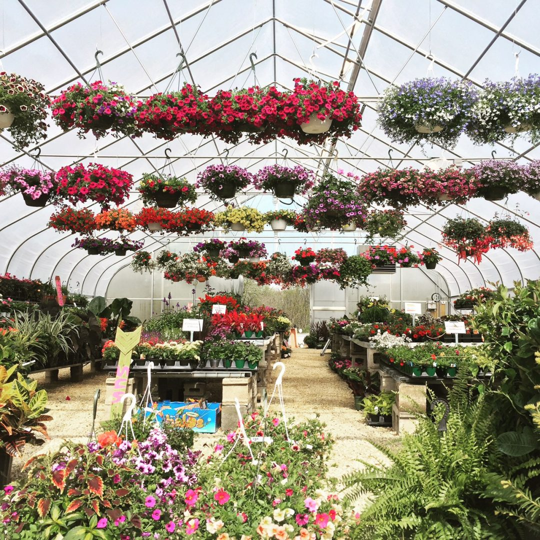 Hanging baskets & so much more!
