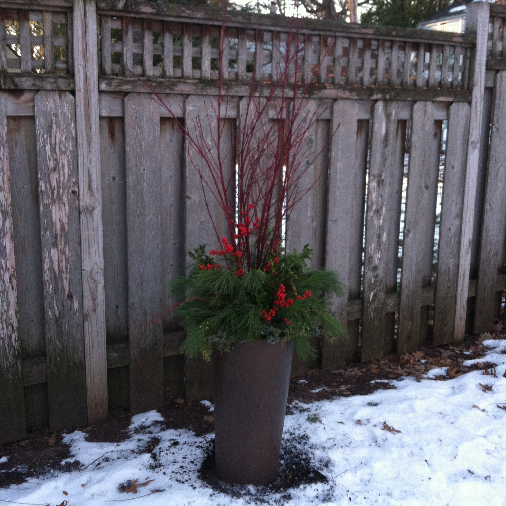 Backyard container with red dogwood