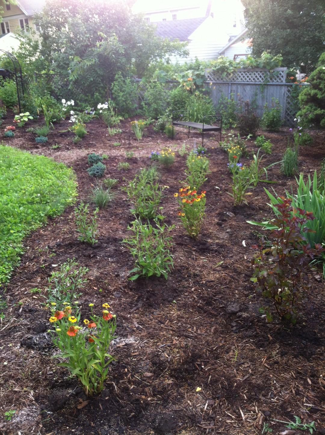 Newly planted perennial garden