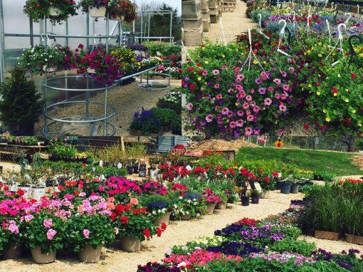 Visit Jada's Garden & Greenhouse