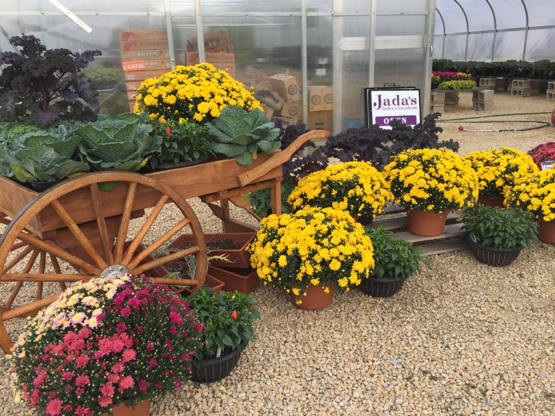 Fall Greenhouse Season