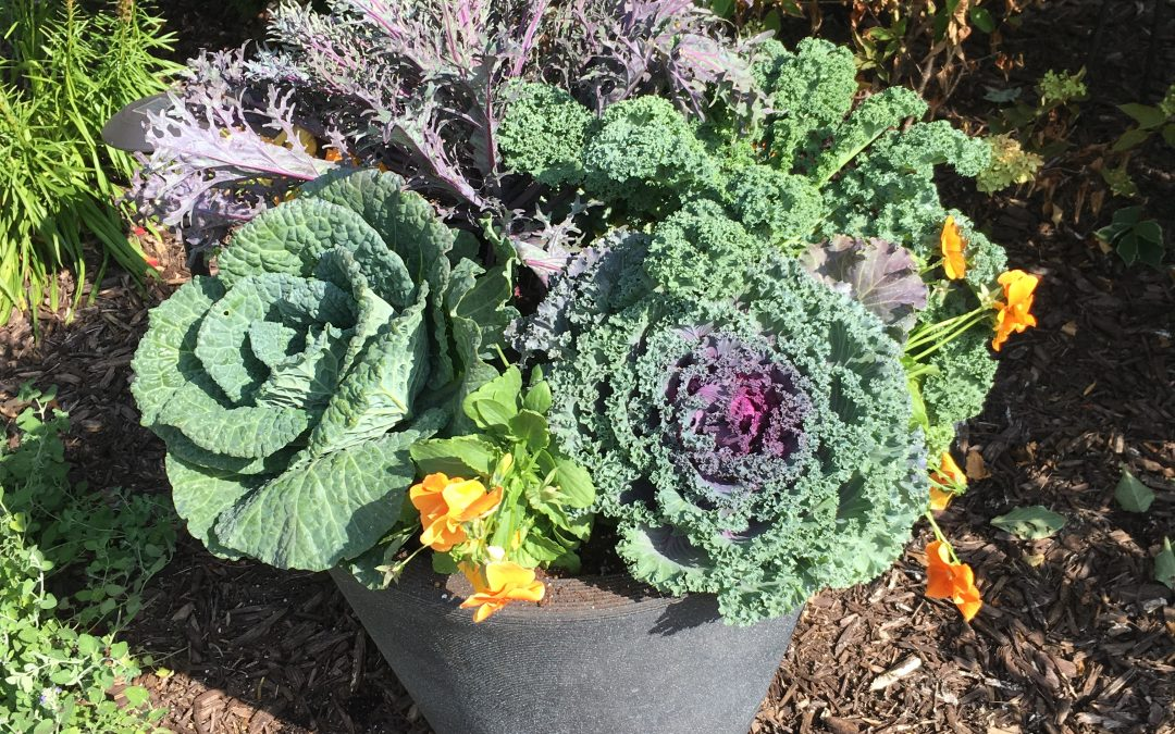 Cabbage & Kale!