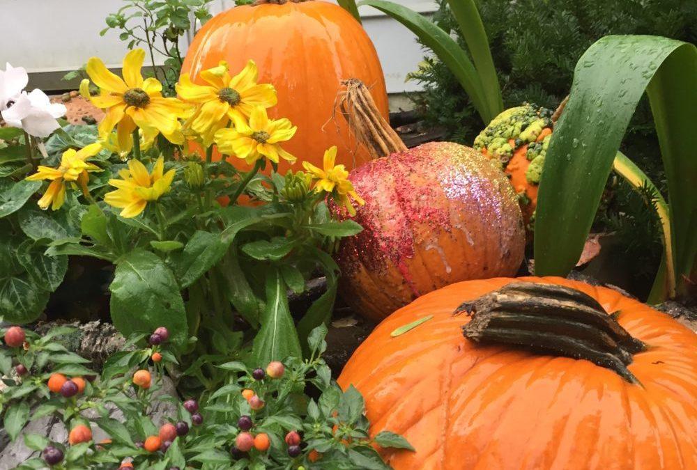 Pumpkins always spice things up!