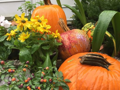 Pumpkins always spice things up!
